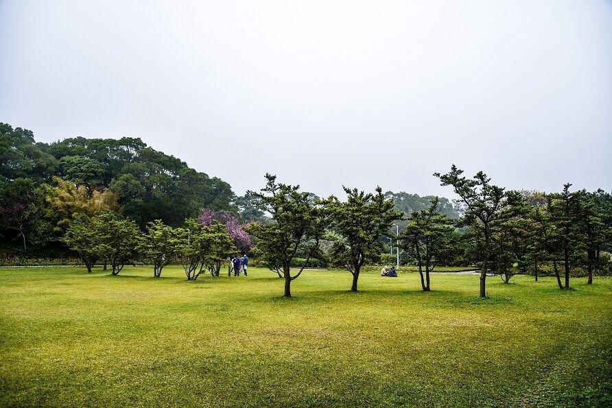 杜鵑花園旁的廣大草皮,是不是很適合野餐呢?