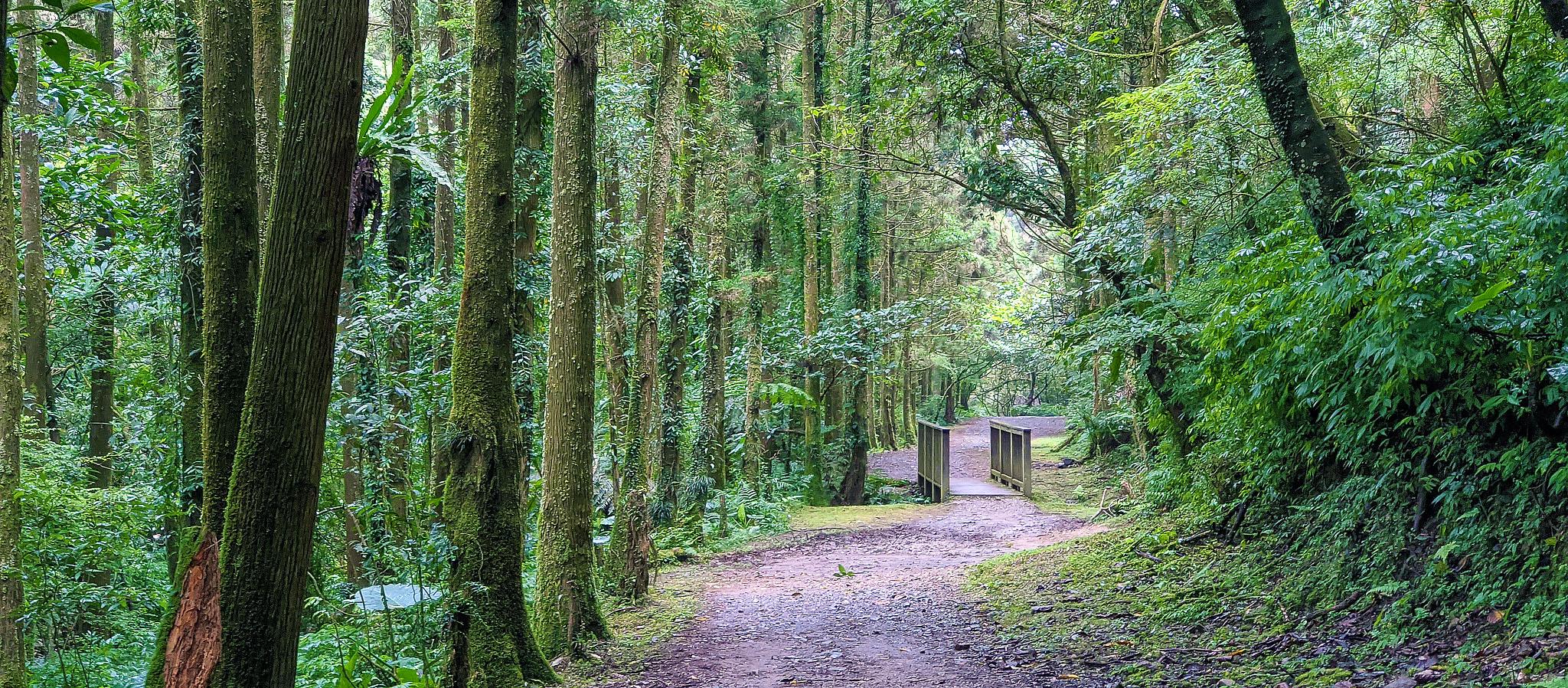 淡蘭古道中路|清涼好走「坪溪古道」,被杉林包圍,山嵐圍繞的沿溪步道,親子同遊都適合