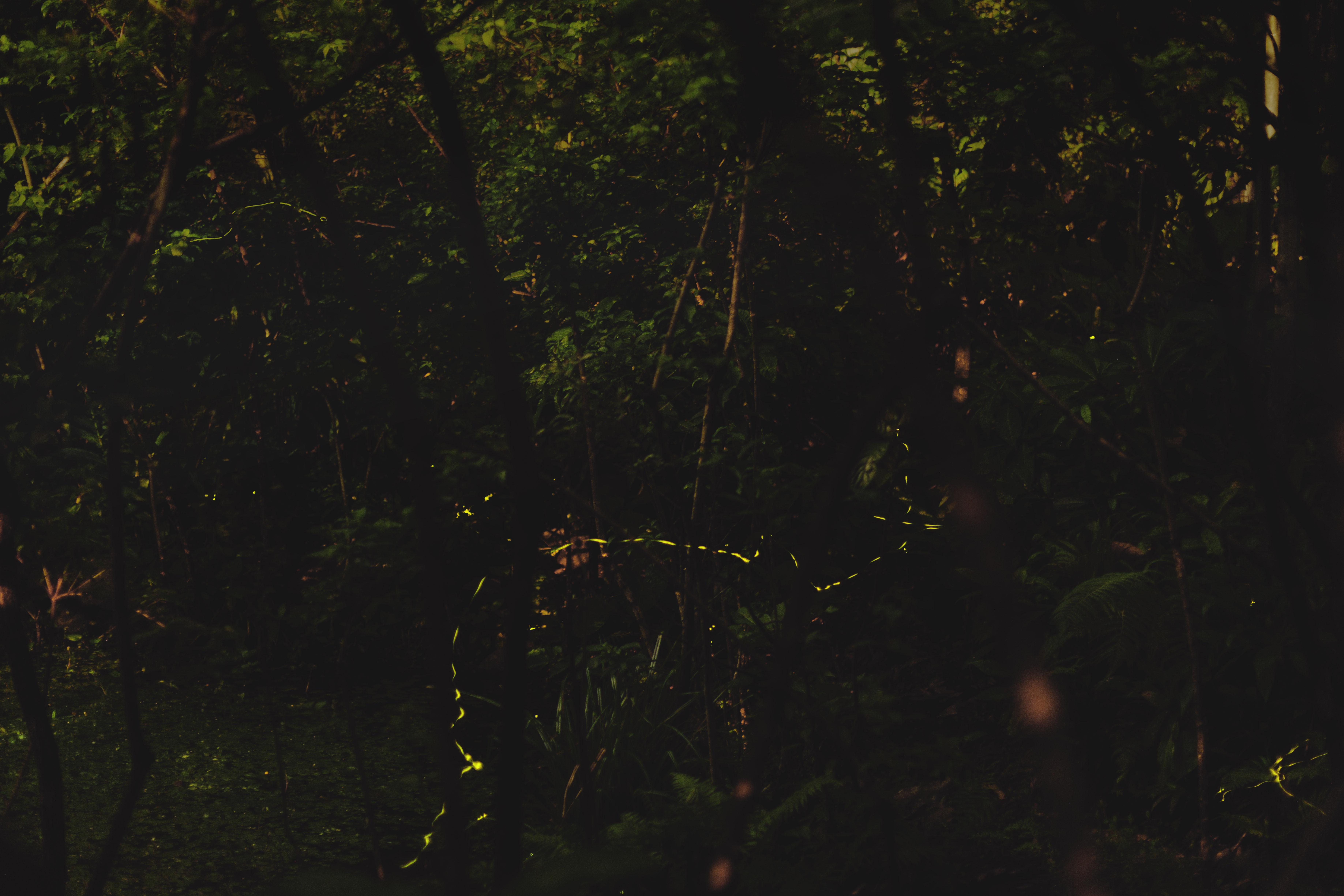 來一場浪漫的夜間散步,台北、新北 4 條賞螢秘境步道整理與螢火蟲欣賞須知
